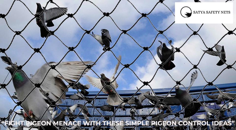 Bird-safety-nets